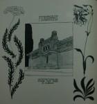 joseph olbrich ver sacrum july 1898